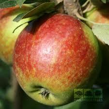 Ellison's Orange Fruit