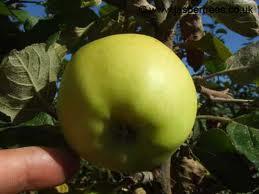 Emneth Early Fruit